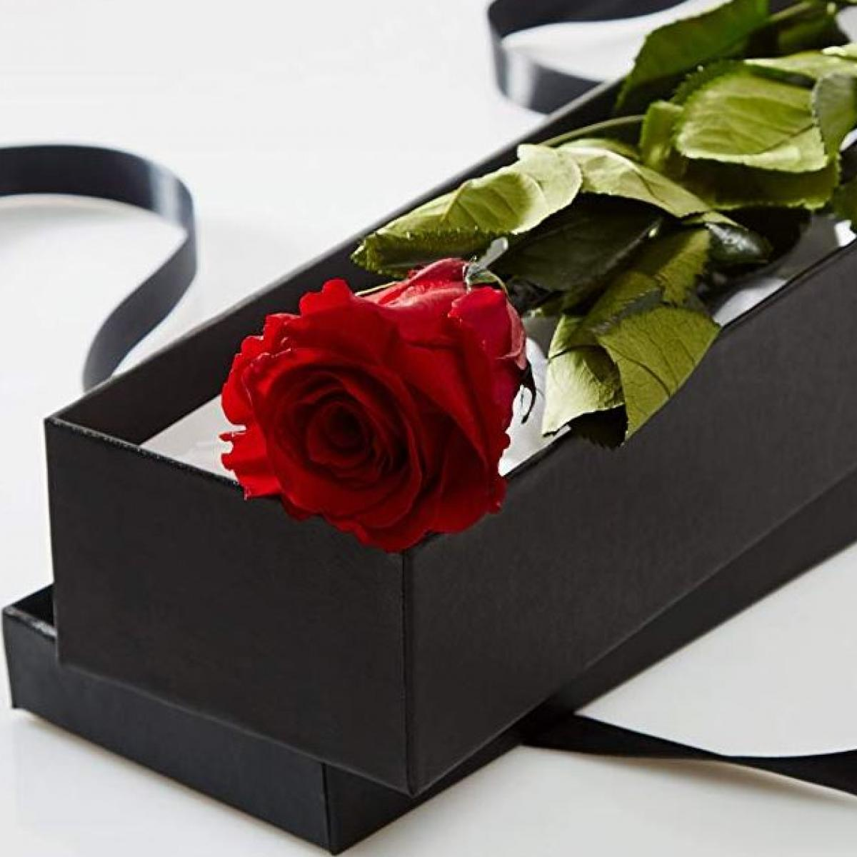 Long Lasting Stemmed Real Rose